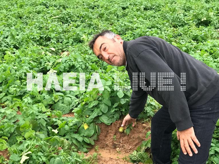 patata11