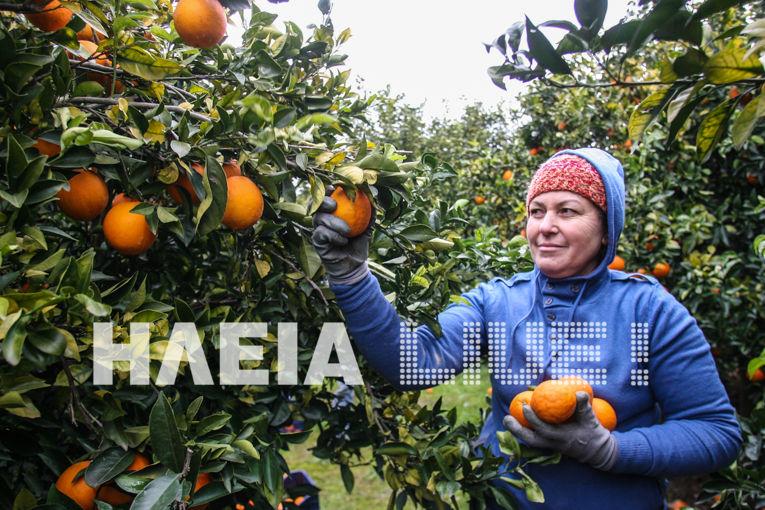 portokalia5
