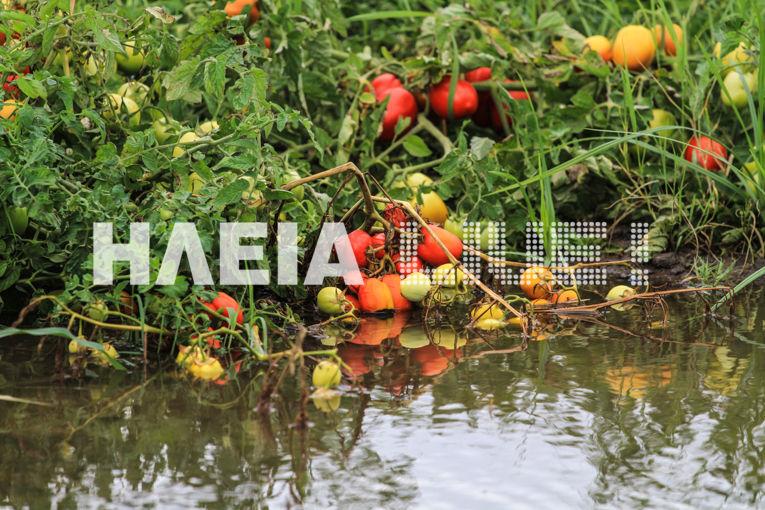 tomata plimm2