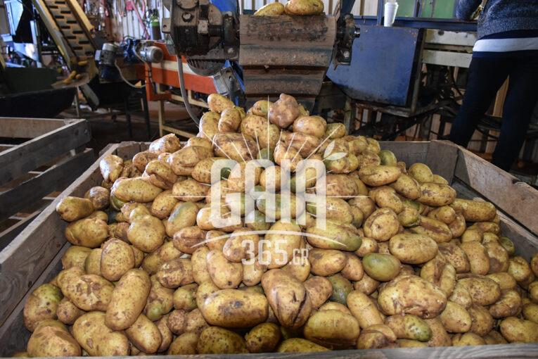 patata 3