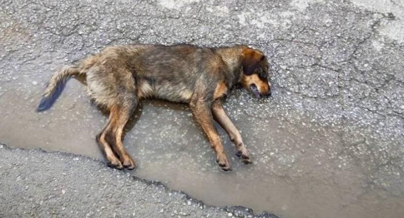 Αμαλιάδα: Συνελήφθη 45χρονη για δηλητηρίαση σκύλου