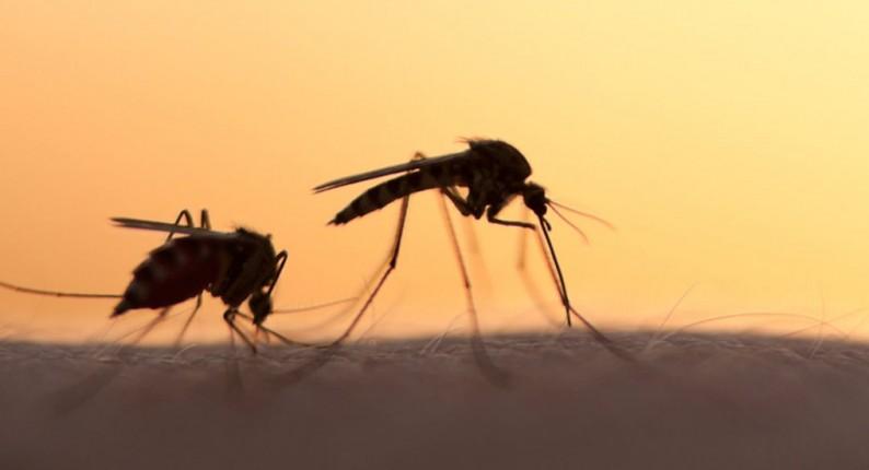Ηλεία: Μας ρούφηξαν το αίμα τα κουνούπια