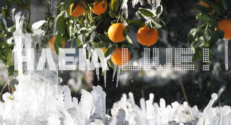 Ηλεία: Τι λένε οι αγρότες για τις καταστροφές απο τον παγετό