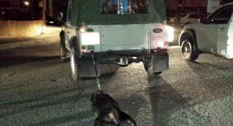 Αλφειούσα: Συνελήφθη εμπλεκόμενος στην υπόθεση κακοποίησης σκύλου