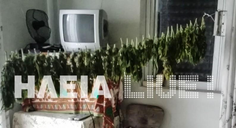 Ηλεία: Το δις εξ αμαρτείν . . . - Ο αποταγμένος αστυνομικός με την οικιακή παραγωγή χασίς