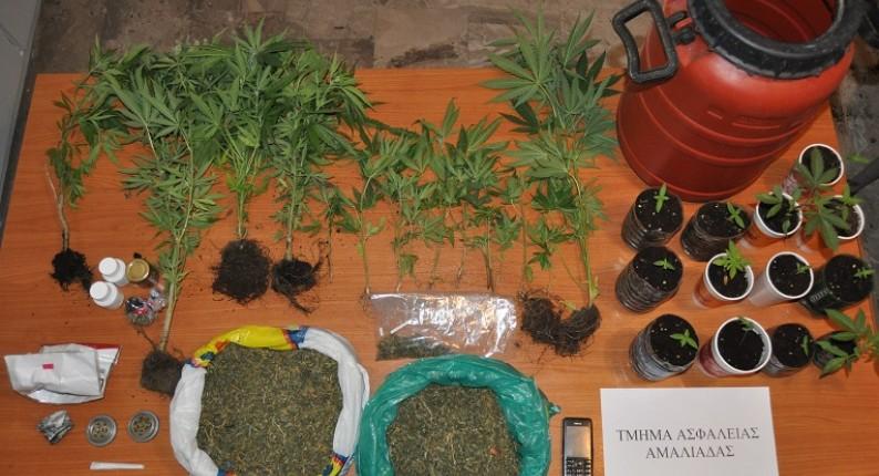Ηλεία: Στα φάκα 56χρονος χασισοκαλλιεργητής στον Αμπελόκαμπο
