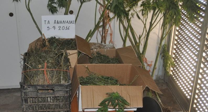 Συνεχίζονται οι συλλήψεις στην Ηλεία για καλλιέργεια και κατοχή ναρκωτικών